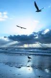 Coucher du soleil argenté Image libre de droits