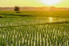 Coucher du soleil au champ Photographie stock libre de droits