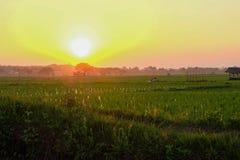 Coucher du soleil au champ Photographie stock