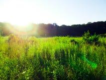 Coucher du soleil au-dessus du côté d'un pré Image libre de droits