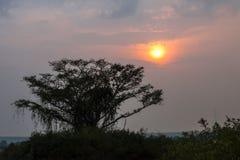 Coucher du soleil au-dessus d'arbre énorme dans les Tropes Images libres de droits