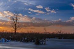 Coucher du soleil au-dessus d'arbre et de roseau Photo libre de droits
