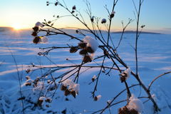 Coucher du soleil au-dessus d'horizontal de l'hiver Photos libres de droits
