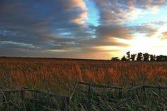 Coucher du soleil au-dessus d'un champ de blé photo stock