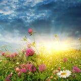 Coucher du soleil au-dessus d'un gisement de fleur. photographie stock libre de droits