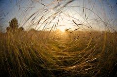 Coucher du soleil au-dessus d'un pré Photographie stock libre de droits