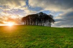 Coucher du soleil au-dessus d'un support des arbres de hêtre Image libre de droits