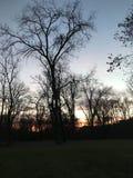 Coucher du soleil au-dessus d'une rivière derrière de grands arbres Image libre de droits