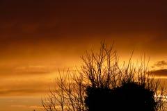 Coucher du soleil au-dessus de branche Photographie stock