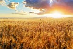 Coucher du soleil au-dessus de champ de blé photographie stock