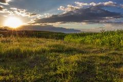 Coucher du soleil au-dessus de champ de maïs Photographie stock