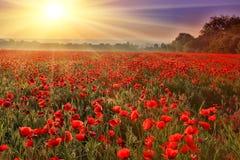 Coucher du soleil au-dessus de champ de pavot Image libre de droits