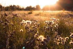 Coucher du soleil au-dessus de champ gentil d'herbe pelucheuse Image libre de droits