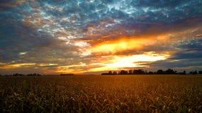 Coucher du soleil au-dessus de champ de maïs Image libre de droits
