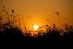 Coucher du soleil au-dessus de champ tubulaire dans le delta du Danube images libres de droits