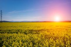 Coucher du soleil au-dessus de gisement de colza photos stock