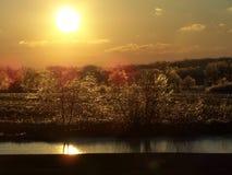 Coucher du soleil au-dessus de glace, des arbres, et de l'étang. Photos stock