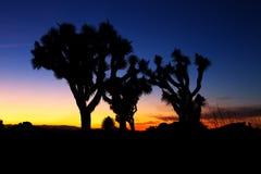 Coucher du soleil au-dessus de Joshua Tree, Joshua Tree National Park Photo stock