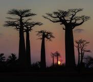 Coucher du soleil au-dessus de l'allée des baobabs, Madagascar Photographie stock