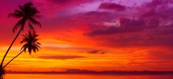Coucher du soleil au-dessus de l'océan avec les palmiers tropicaux Image libre de droits