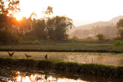 Coucher du soleil au-dessus de la campagne vietnamienne Images libres de droits