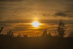 Coucher du soleil au-dessus de la forêt Photos libres de droits