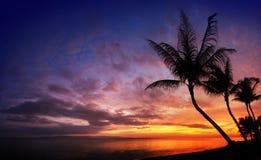 Coucher du soleil au-dessus de la mer avec les palmiers tropicaux Image stock