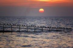 Coucher du soleil au-dessus de la mer et des mouettes image stock