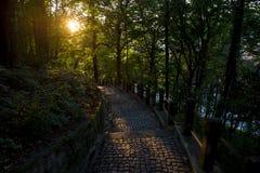 Coucher du soleil au-dessus de la route de pavé rond dans la forêt Photographie stock libre de droits