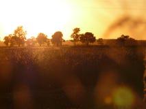 Coucher du soleil au-dessus de la zone Images stock