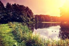 Coucher du soleil au-dessus de lac avec des canards dans la forêt Photo stock