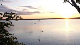 Coucher du soleil au-dessus de lac calme, oiseaux entourant au-dessus banque de vidéos
