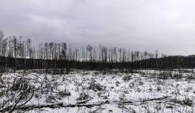 Coucher du soleil au-dessus de parc national de Kampinos en hiver Photos stock