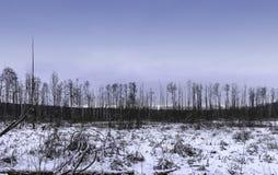 Coucher du soleil au-dessus de parc national de Kampinos en hiver Photographie stock libre de droits