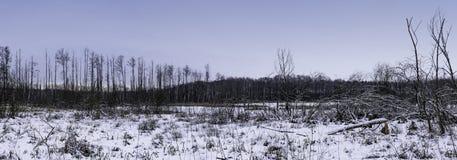 Coucher du soleil au-dessus de parc national de Kampinos en hiver Images libres de droits