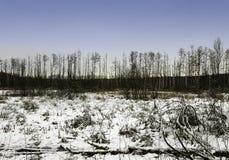 Coucher du soleil au-dessus de parc national de Kampinos en hiver Image stock