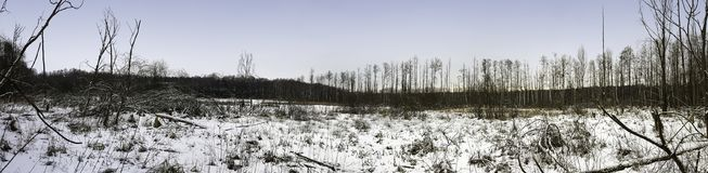 Coucher du soleil au-dessus de parc national de Kampinos en hiver Images stock