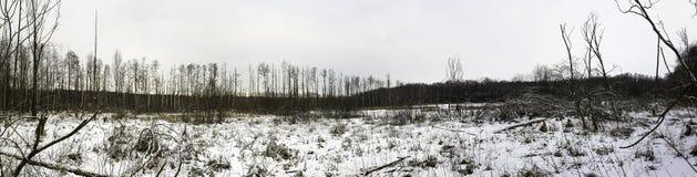 Coucher du soleil au-dessus de parc national de Kampinos en hiver Photographie stock