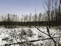 Coucher du soleil au-dessus de parc national de Kampinos en hiver Photo libre de droits