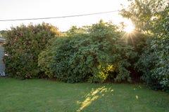 Coucher du soleil au-dessus de pelouse de jardin image stock