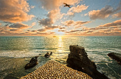 Coucher du soleil au-dessus de plage de Muriwai et de colonie de fou de Bassan Photographie stock libre de droits