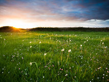 Coucher du soleil au-dessus de pré Image stock