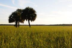 Coucher du soleil au-dessus de prairie en Floride Images libres de droits