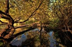 Coucher du soleil au-dessus de rivière Photo libre de droits