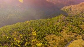 Coucher du soleil au-dessus de route par la forêt colorée d'automne banque de vidéos