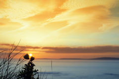 Coucher du soleil au-dessus de tête de boucle avec les chardons sauvages silhouettés Photographie stock libre de droits