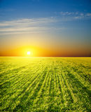 Coucher du soleil au-dessus de zone Images stock