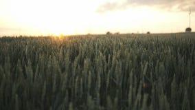 Coucher du soleil au-dessus de zone de blé banque de vidéos