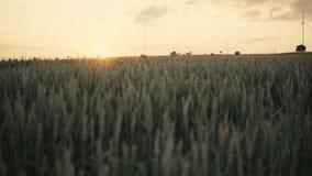 Coucher du soleil au-dessus de zone de blé clips vidéos