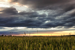 Coucher du soleil au-dessus de zone de blé Photos stock